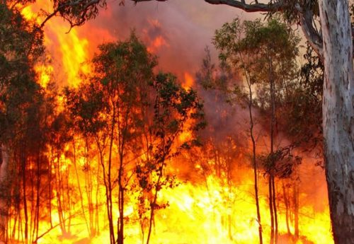 Bushfire Attack Level
